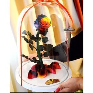گل دیو و دلبر